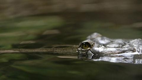 Intensa-busqueda:-Caiman-se-llevo-a-nino-de-un-lago-de-Disney-en-Florida