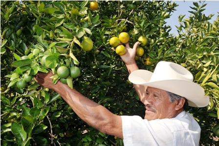 Importacion-de-citricos-se-dispara-a-$us-106-MM