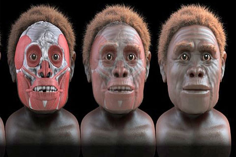 Descubren-probable-antepasado-del-hombre-de-Flores