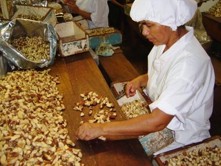 Bolivia-exporto-22-mil-toneladas-de-almendra