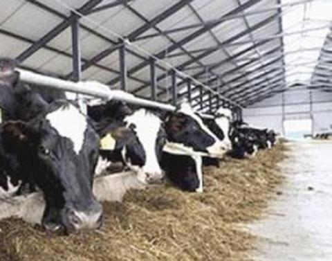 Productores-de-leche-pierden-mas-Bs-5-millones-al-mes-en-Cochabamba