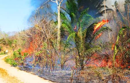 Incendios-por-chaqueos-dejan-perdida-a-productores