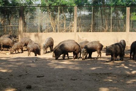 Hay-sobrepoblacion-de-cinco-especies-en-el--Zoo-