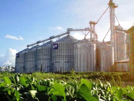Emapa-desarrolla-4-plantas-para-granos