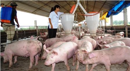 De-5-a-7-kilogramos-crece-consumo-de-carne-de-cerdo