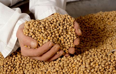 El-74%-de-las-exportaciones-de-alimentos-del-pais-provienen-de-Santa-Cruz