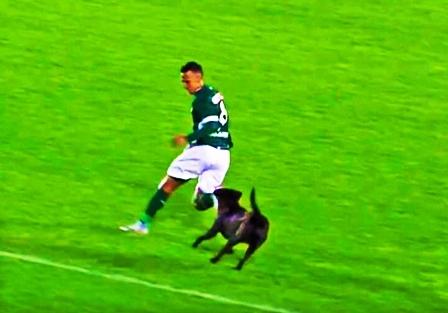 Perro-se-colo-en-un-partido-y-persiguio-a-un-futbolista