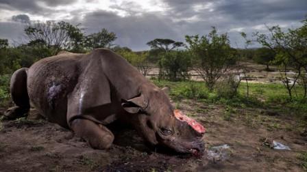 Perturbadora-imagen-de-rinoceronte-gana-premio-
