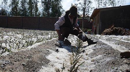Granizada-afecta-cultivos-agricolas-de-Sacabamba