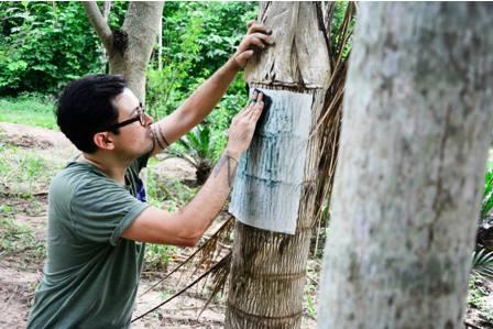 Unen-fuerzas-para-conservar-bosques-