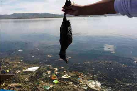 Peru-evalua-Ley-contra-polucion-del-Titicaca