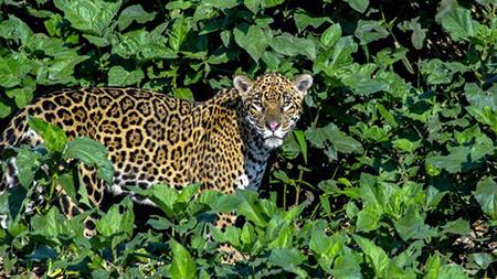 Biodiversidad-para-erradicar-la-pobreza-en-Latinoamerica