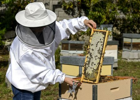 Fumigacion-afecta-la-produccion-de-miel
