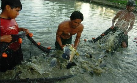 La-produccion-piscicola-en-Santa-Cruz-crece-un-30%-