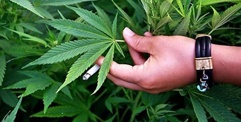 Descubre-por-que-el-20-de-abril-se-celebra-el-Dia-Mundial-de-la-Marihuana