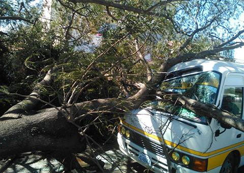 Fuertes-vientos-causan-estragos-en-la-capital-crucena