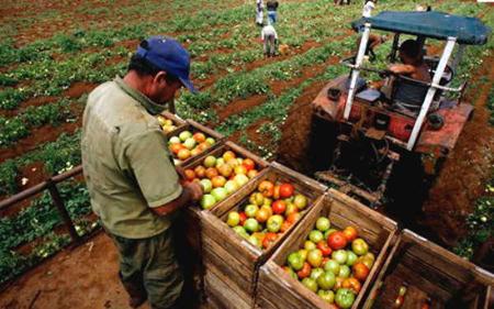 Produccion-de-alimentos-no-cubre-la-demanda-interna-en-Bolivia