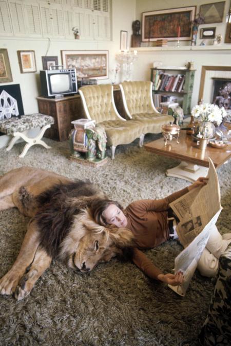 Un-leon-de-250-kg-es-la-mascota-de-una-familia-en-Gerona