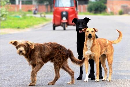 Plan-de-esterilizacion-de-canes-solo-en-un-Distrito