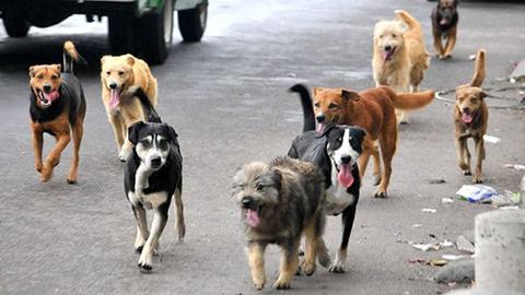 Perro-callejero-ataca-a-tres-ninos-en-un-kinder