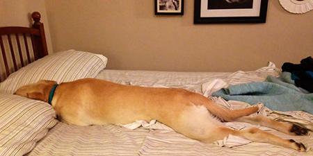 ¿Esta-bien-que-tu-perro-duerma-contigo-en-tu-cama?