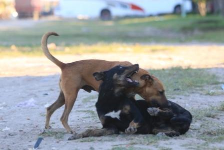 Suben-los-casos-de-rabia-canina--a-nivel-departamental