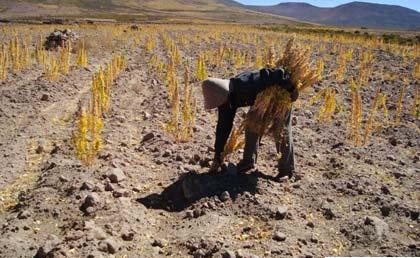 Gobierno-destina-Bs-62-millones-para-pequenos-productores-agropecuarios-de-Oruro