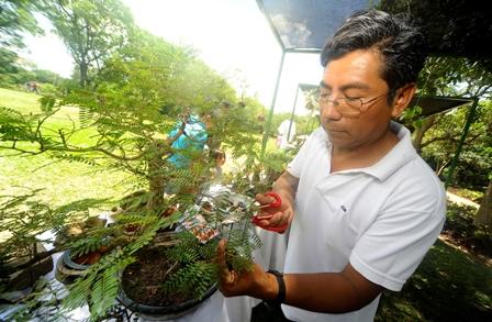 El-bonsai,-arte-asiatico-que-crece-en-Santa-Cruz
