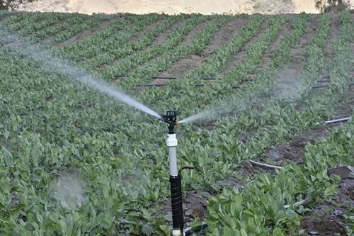 Bolivia-incremento-a-131.000-toneladas-la-produccion-de-alimentos-ecologicos