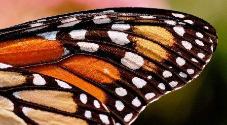 Crean-sistema-de-seguridad-basado-en-mariposas