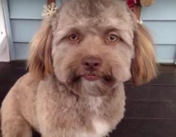 Perro-con-rostro--casi--humano,-causa-furor-en-las-redes-sociales