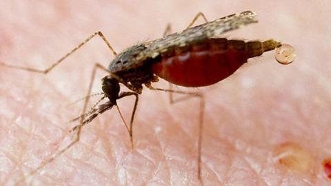 Confirman-un-caso-de-malaria-en-Santa-Cruz