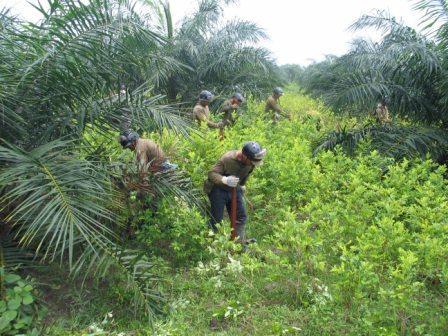 Cultivar-coca-o-desarrollo-rural-como-alternativa-