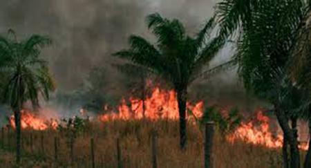 -Reportan-que-este-ano-se-registraron-mas-incendios-que-en-cualquier-gestion-en-Santa-Cruz