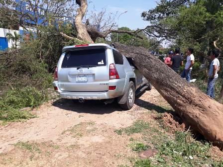 Caida-de-arboles-provoca-danos-en-tres-vehiculos-