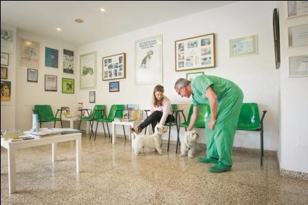 Conozca-el-cancer-del-perro-que-puede-salvarse-con-quimioterapias