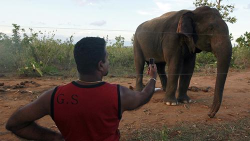 Elefante-salvaje-mata-a-un-hombre-que-intentaba-hipnotizarlo-(video)