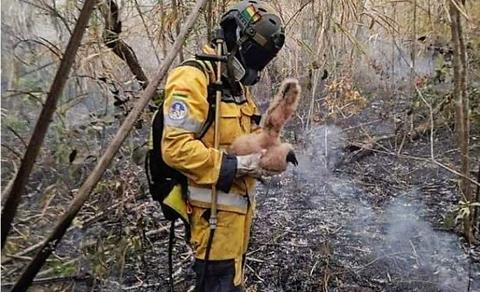 Voluntario-muere-cuando-combatia-al-fuego-en-el-Parque-Tunari