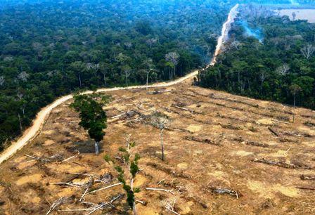 Deforestacion-en-Amazonia-fue-la-mas-alta
