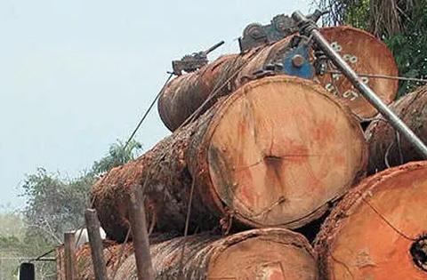 En-Guarayos-y-Concepcion-decomisan-madera-ilegal-valuada-en-Bs-8-millones