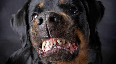 Tres-perros-matan-a-una-mujer-de-la-tercera-edad-en-Oruro