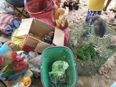 -Venden-animales-silvestres-en-Montero