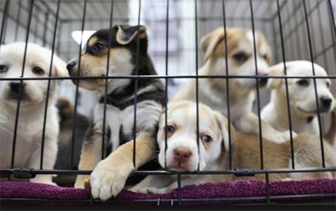 Oruro-prohibe-la-venta-de-mascotas-en-todos-los-mercados-