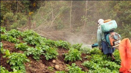 Alarmante-cantidad-de-agrotoxicos-en-el-pais