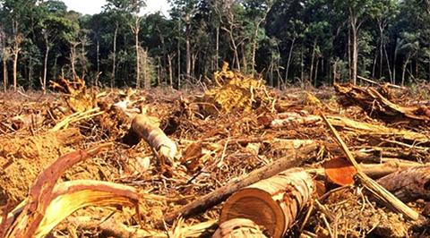 Agroindustria,-ganaderia-y-megaproyectos-amenazan-a-bosques
