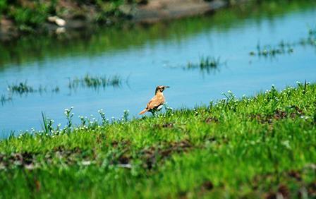 La-perdida-de-la-biodiversidad-es-causada-por-la-ambicion-economica-del-hombre