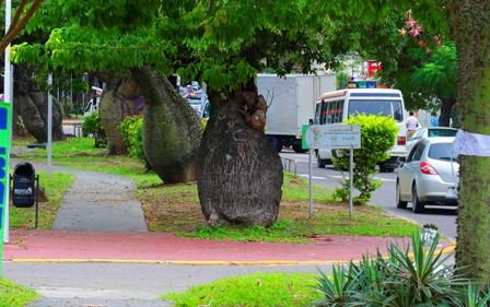 Por-una-arborizacion-urbana-planificada--
