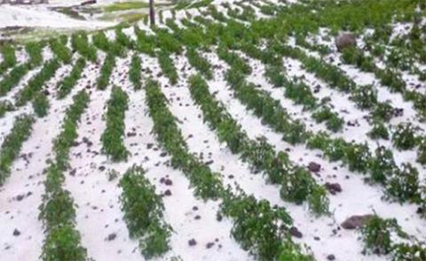 Desastres-naturales-afectan-21.520-hectareas-de-cultivos-