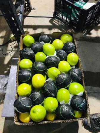 Limones-italianos-de-Santa-Cruz-para-el-mundo