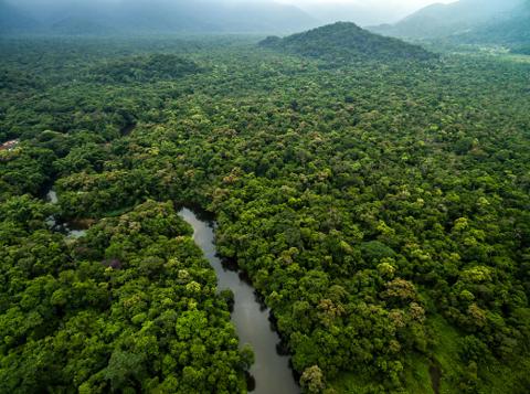 36-nuevas-especies-halladas-en-el-Amazonas